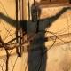 Schatten Tian Ai Qigong